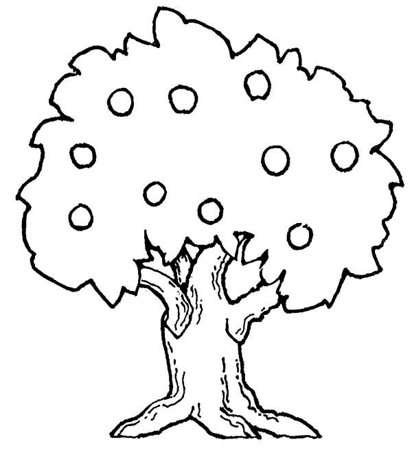 Apple Trees Coloring Pages