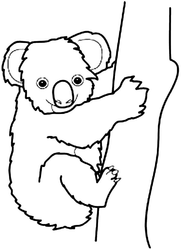 Line Drawing Koala : Koala in australia drawing clipart best