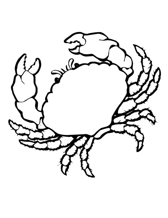 Coloring: Sea Shells Coloring Pages