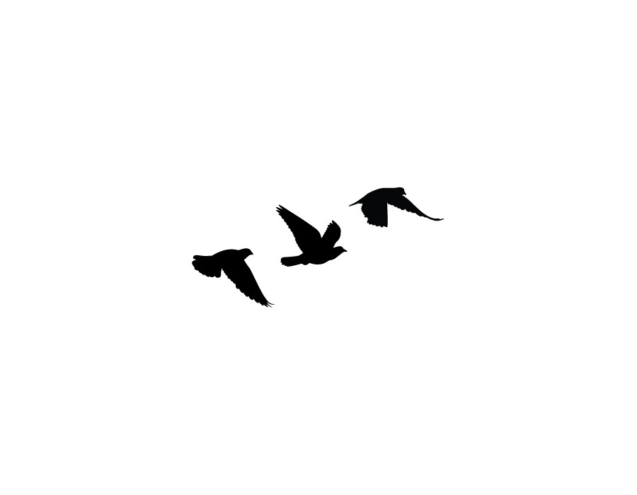 Эскизы тату птиц на руку
