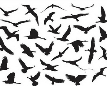 Flying Birds Silhouette Vector - eps ai vector