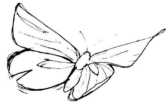 how to draw a cool butterfly