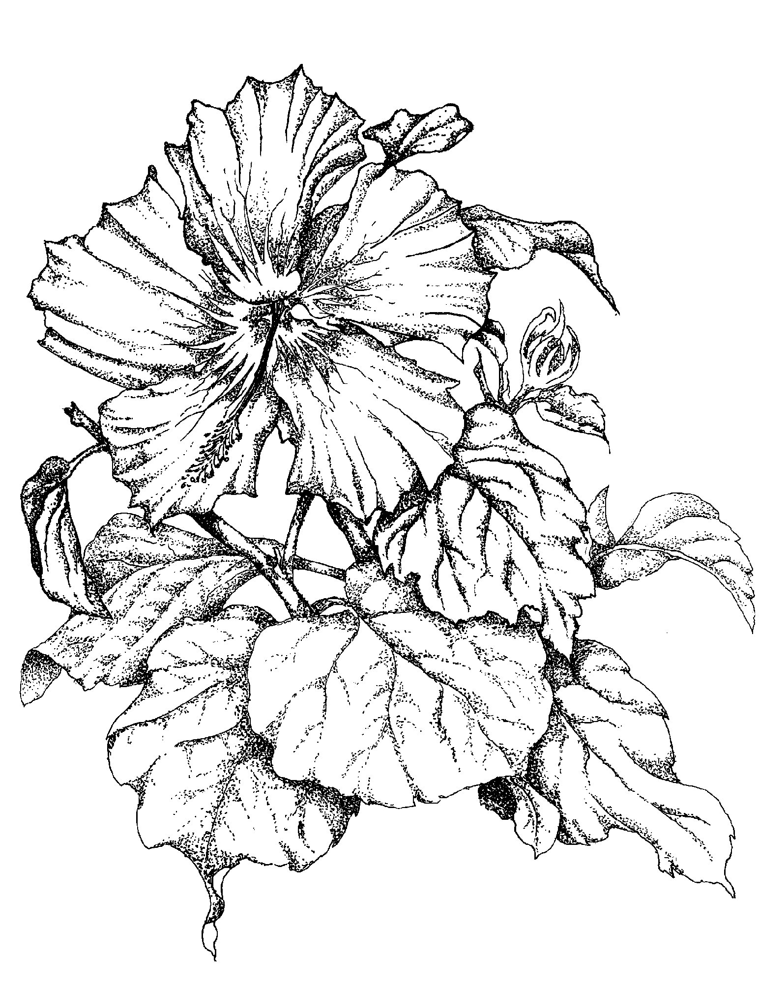 Drawing A Flower ClipArt Best