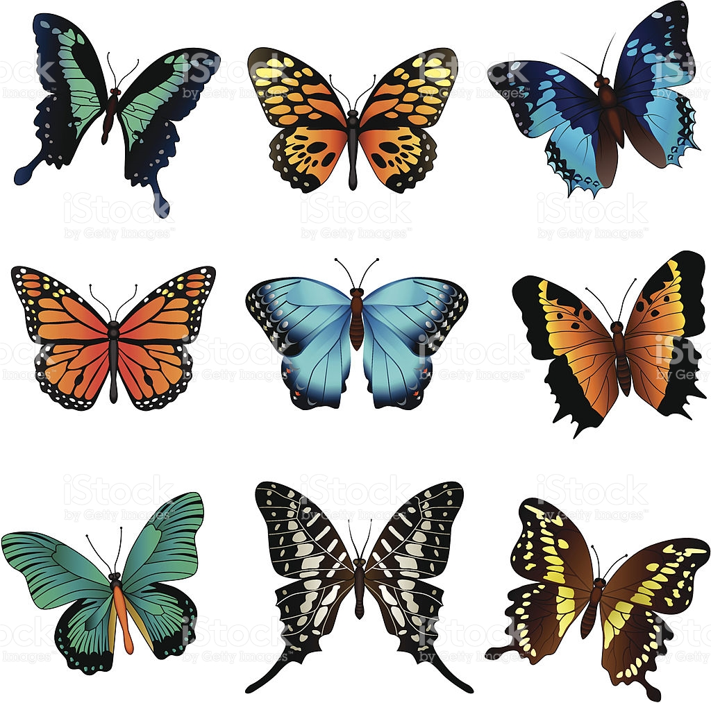 butterfly illustrations clipart best butterflies clipart free butterflies clipartt