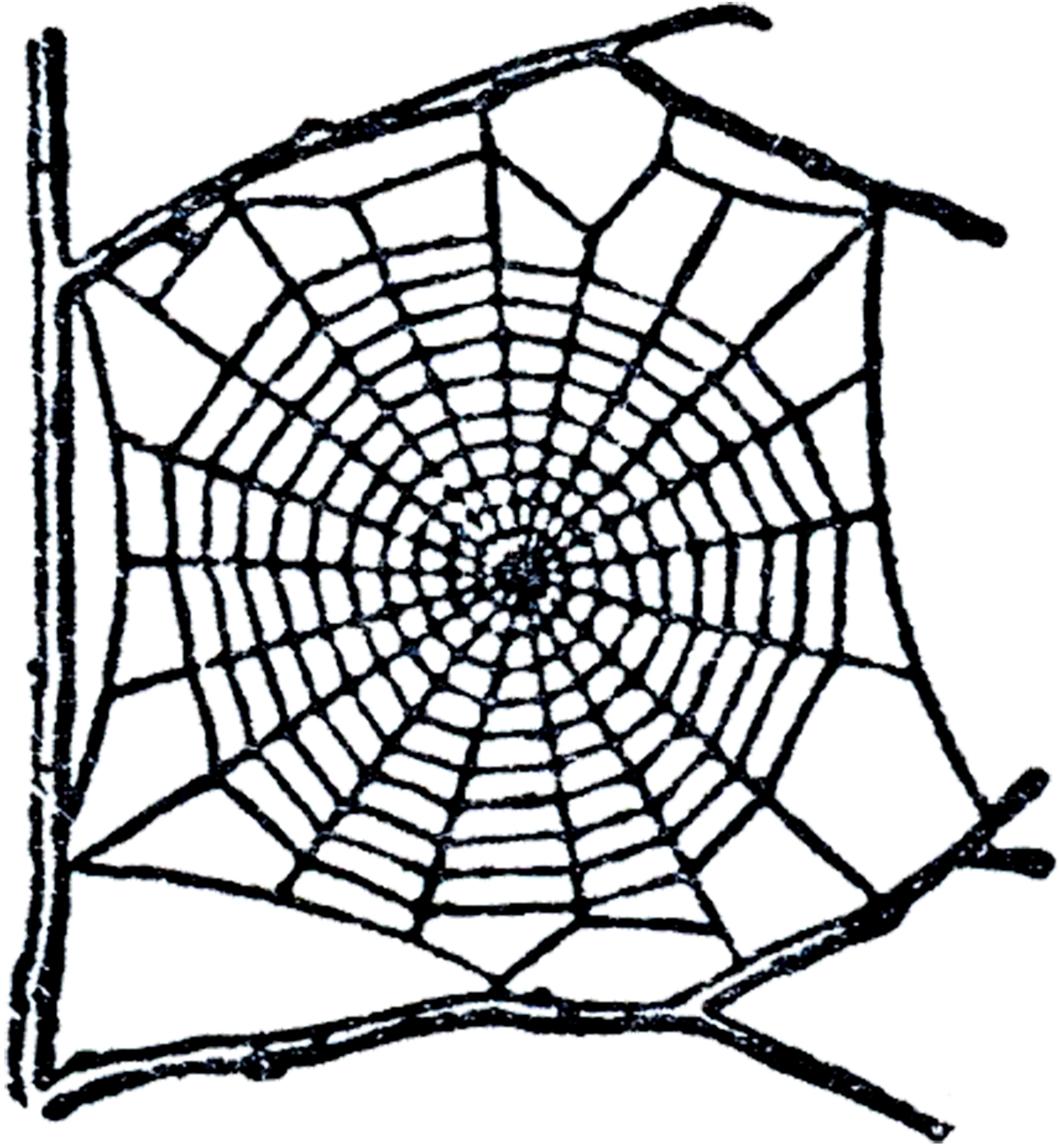 Spider Web Vector - ClipArt Best