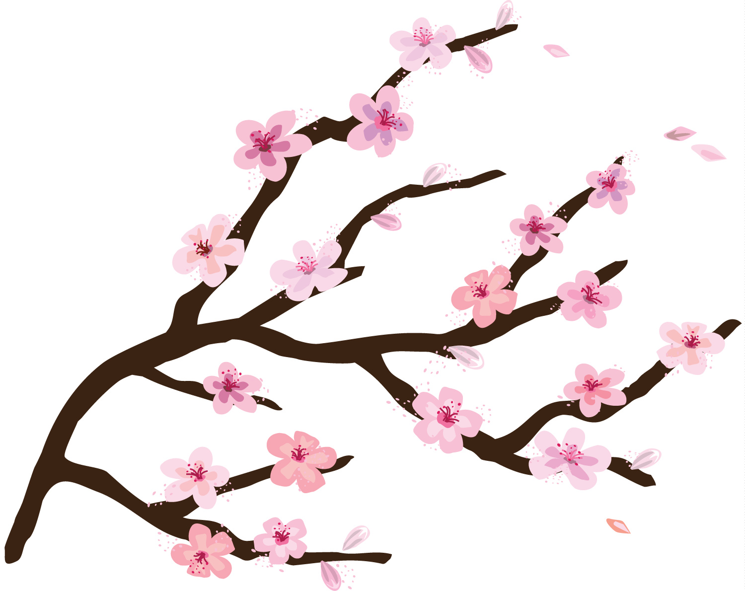 Wall Stickers Cherry Blossom Tree Transparent Cherry Blossom Clipart Best