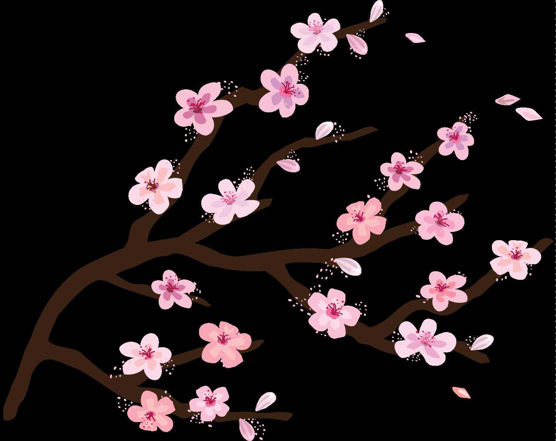Transparent Cherry Blossom
