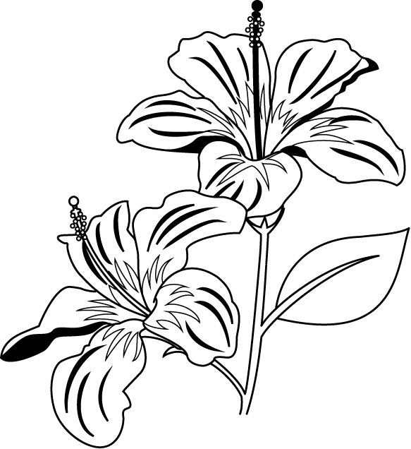 Clip Art Coloring Page Hibiscus Flower Bouquet Loopyland