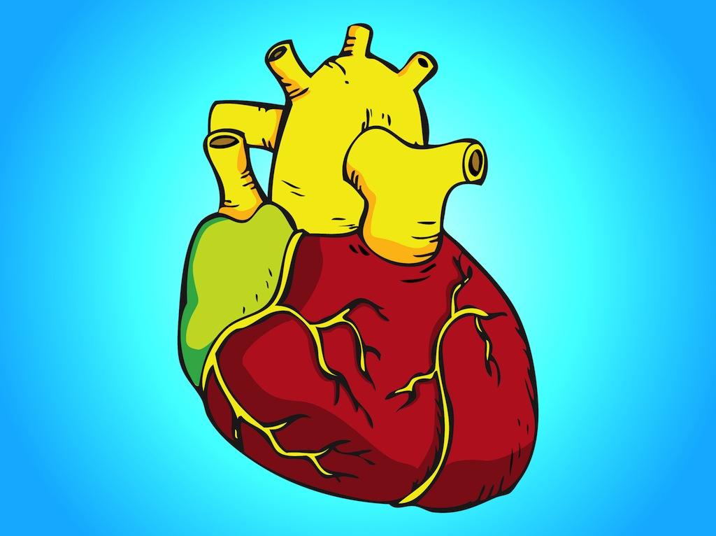 free clip art human heart - photo #31