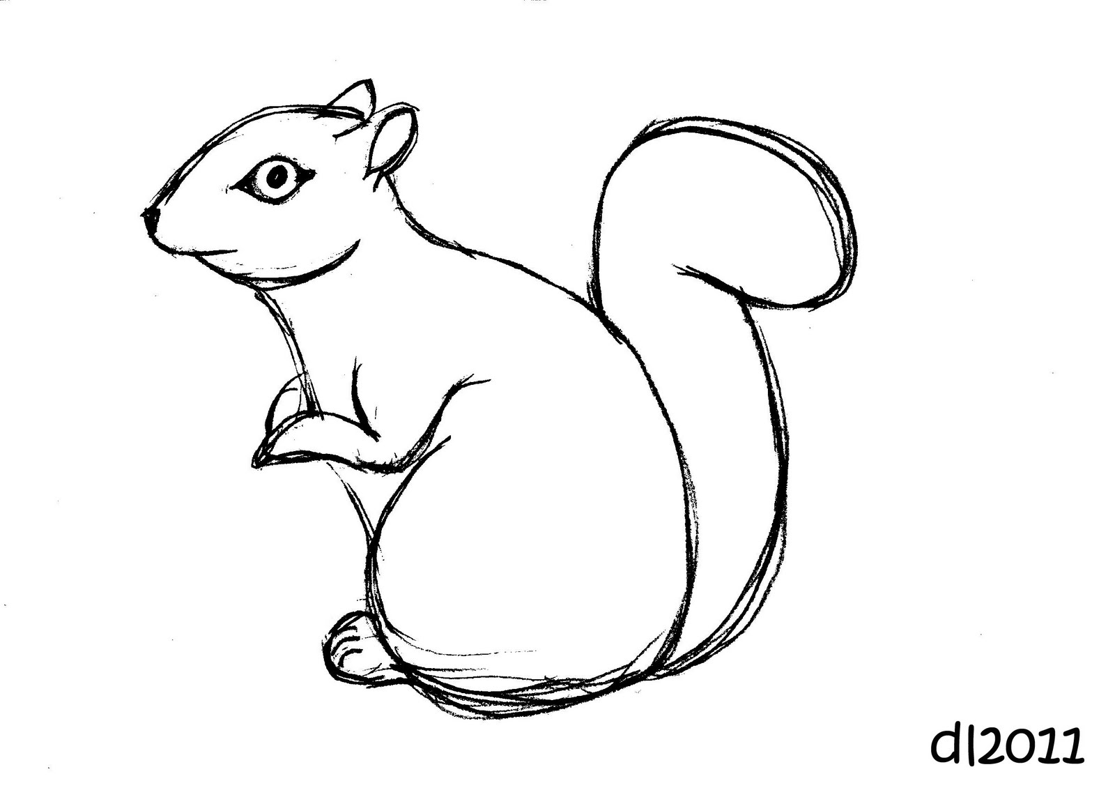 Line Drawing Squirrel : Squirrel drawing clipart best