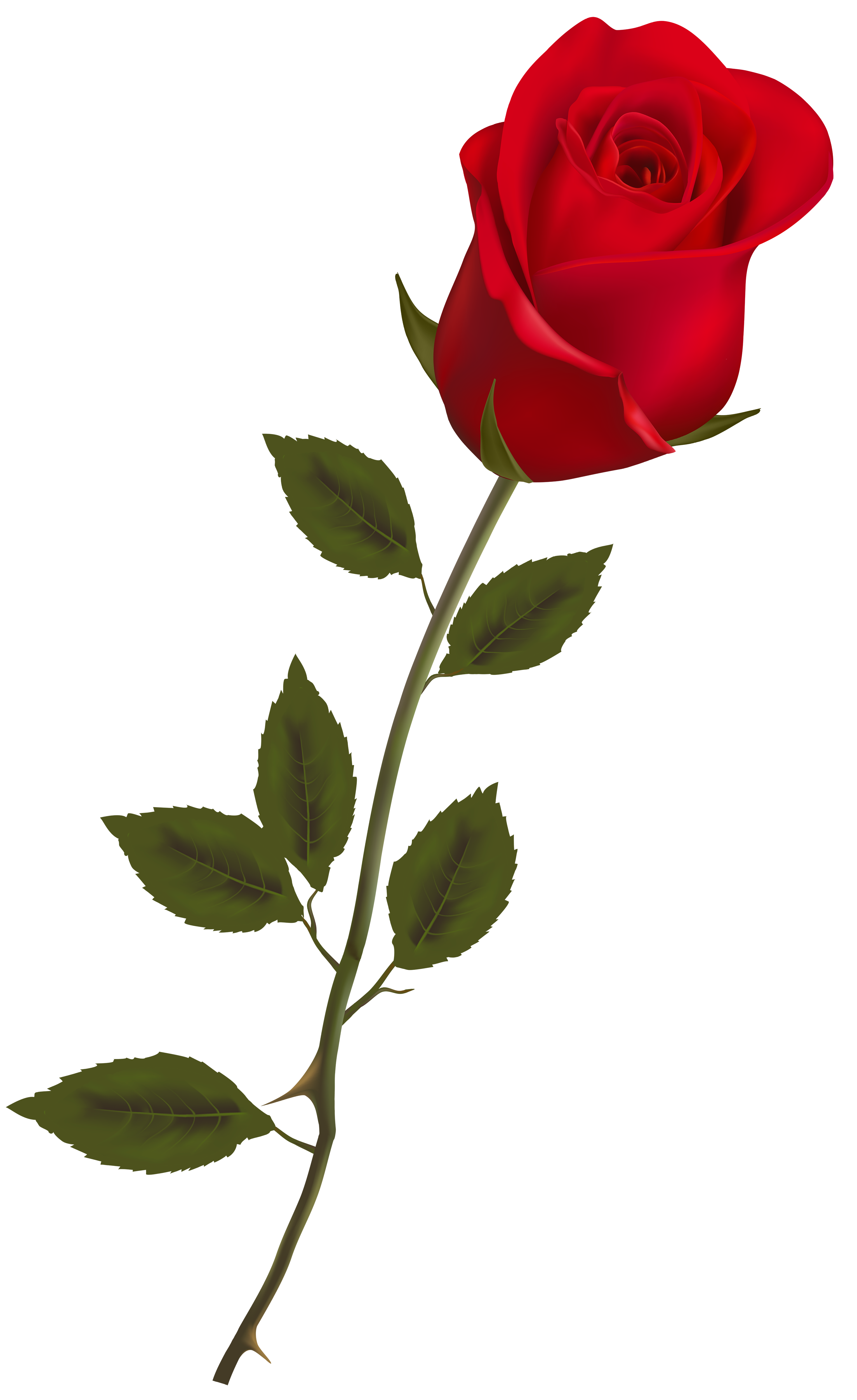 Free Rose Flower Png - ClipArt Best