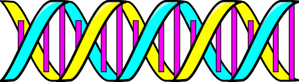 Double Helix DNA - vector Clip Art