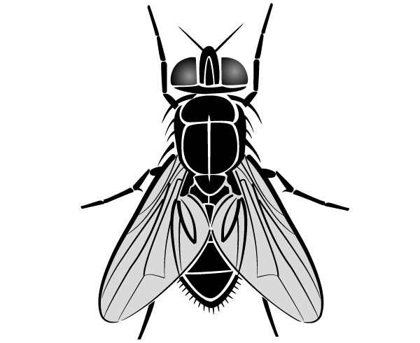 Fly Drawing Free Clipart Best