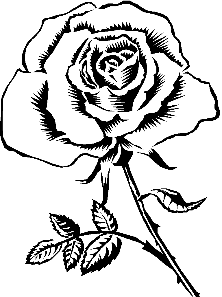 Line Drawing Of Rose