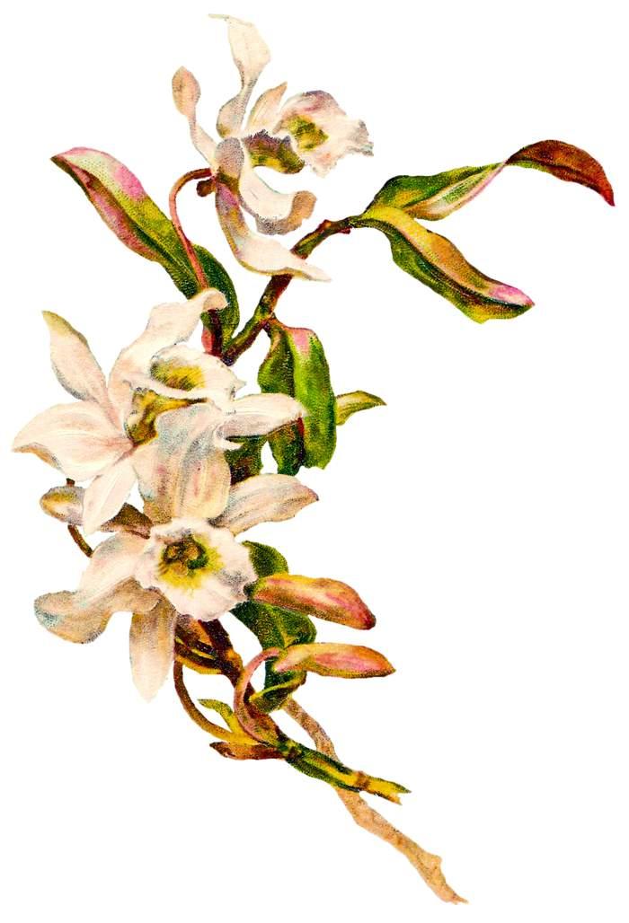 free funeral flower clip art - photo #17