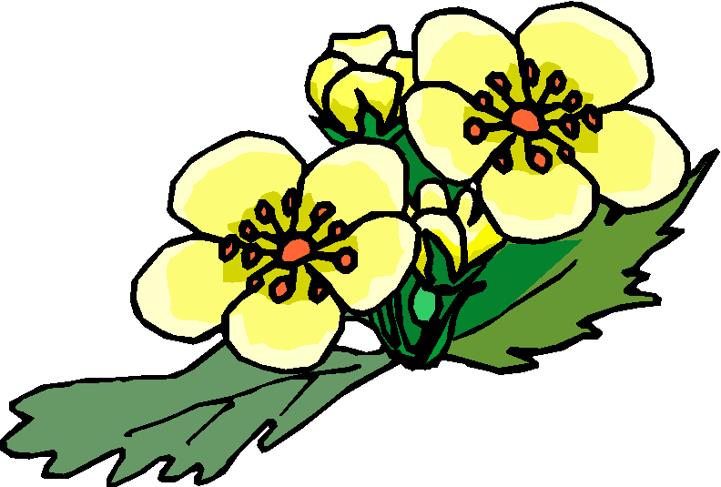 clip art flowers microsoft - photo #24