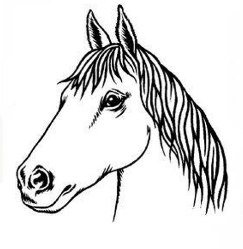 Head Of Horses Images - ClipArt Best