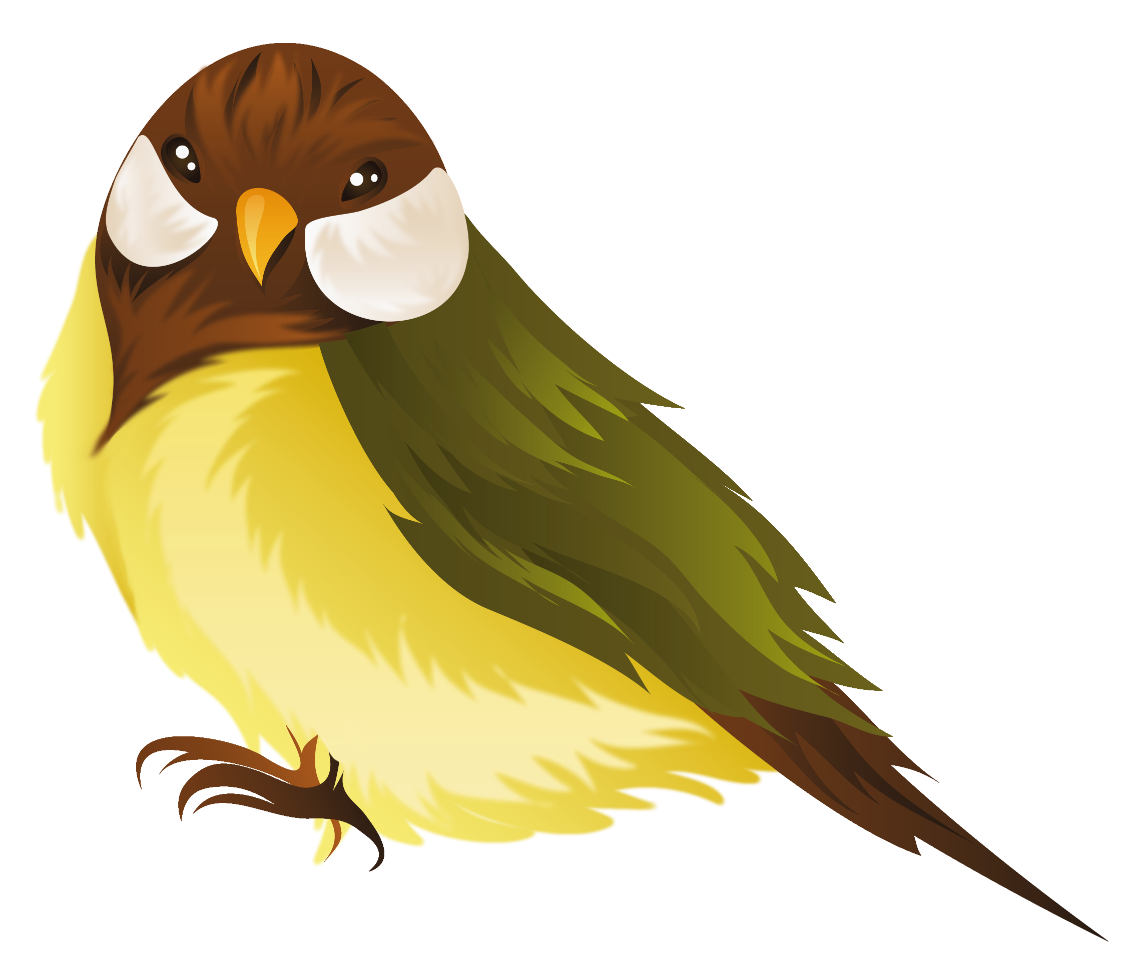 Clipart pictures of birds Birds coloring pages Free Coloring Pages