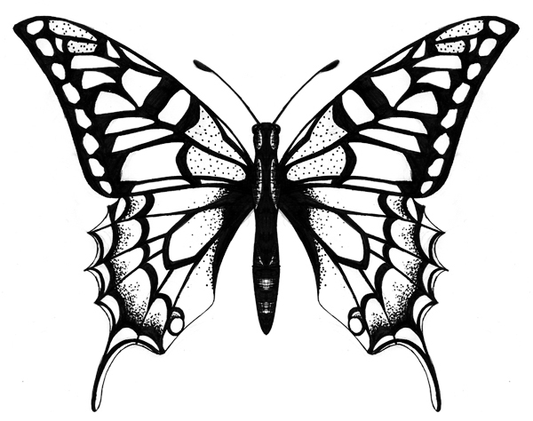 Line Drawing Butterfly Tattoo : Butterfly drawings clipart best
