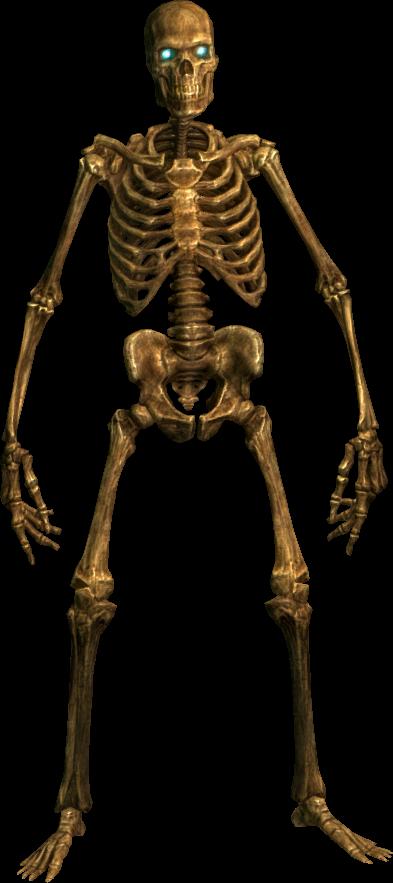 Human bones png - photo#20