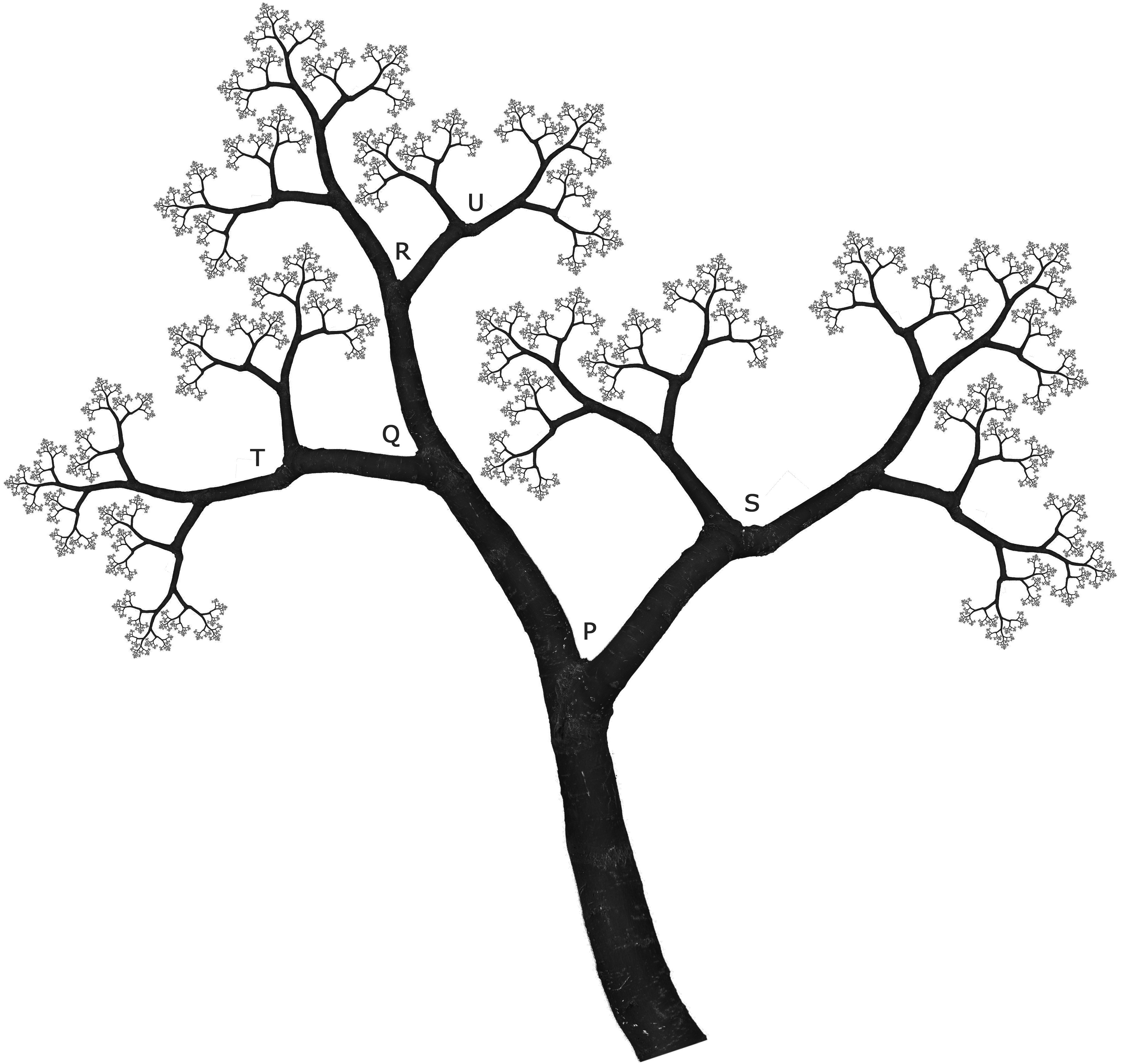 Line Art Of Trees : Line drawing tree clipart best