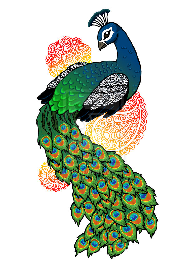 how to draw a colourful peacock
