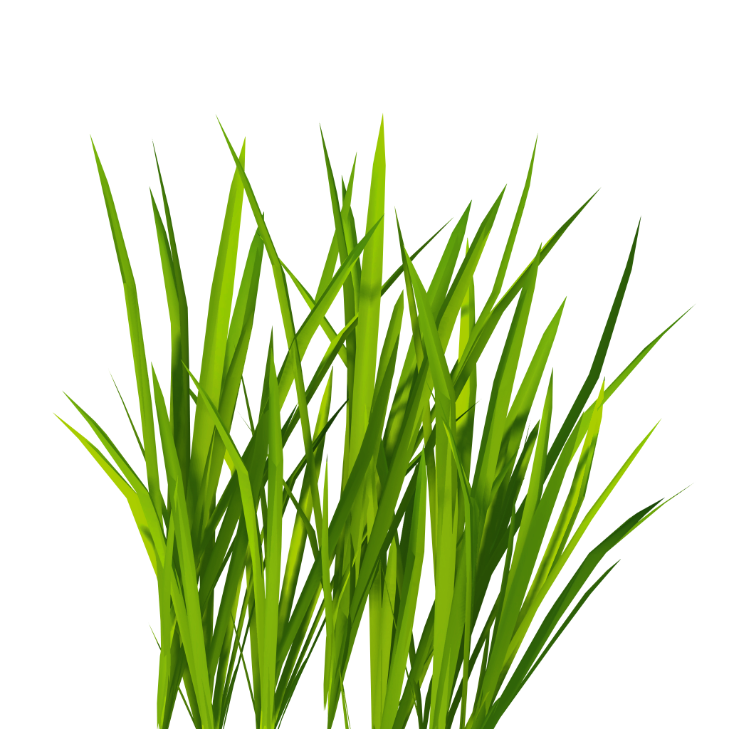 Cartoon grass texture clipart best Long grass plants