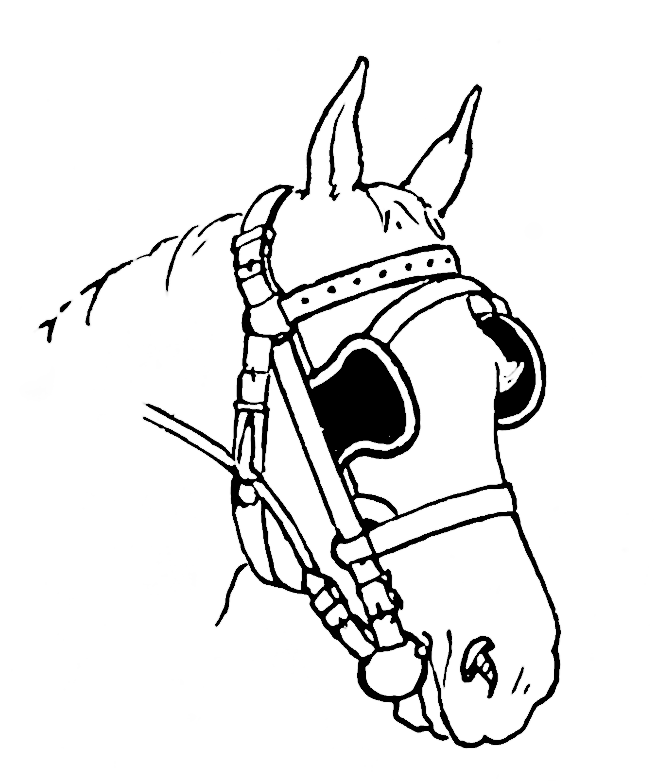 Horse Head Line Drawing Clipart Best