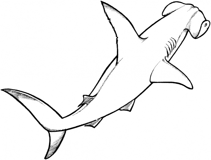 Hammerhead Shark Drawing - ClipArt Best