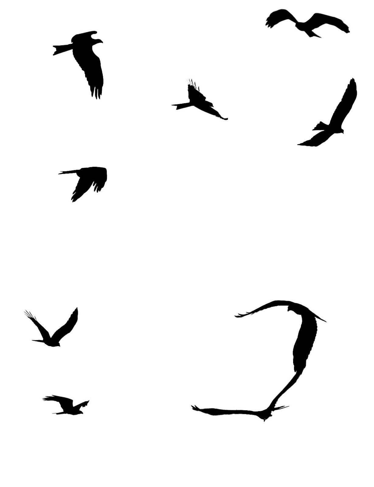 Flock of birds in flight silhouette
