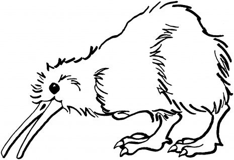 Cute Kiwi Bird Coloring Pages  Bird coloring pages