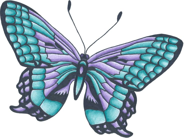 white butterfly drawing