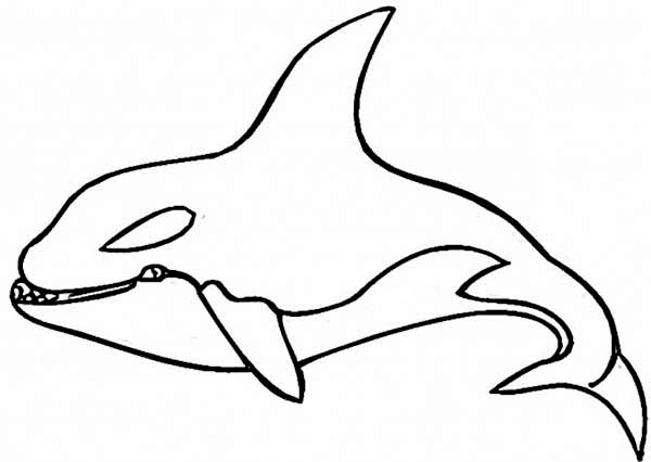 Shamu coloring pages the image kid has it for Shamu coloring pages