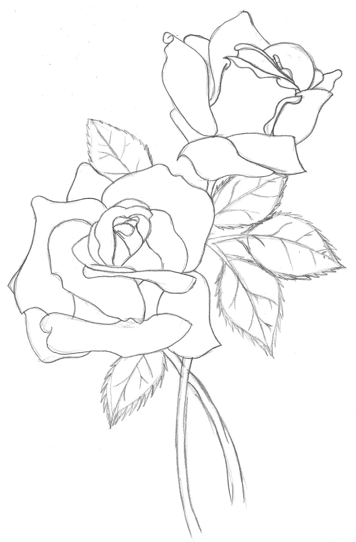 Flower outline | Watercolor Flowers, Traditional Rose Ta…