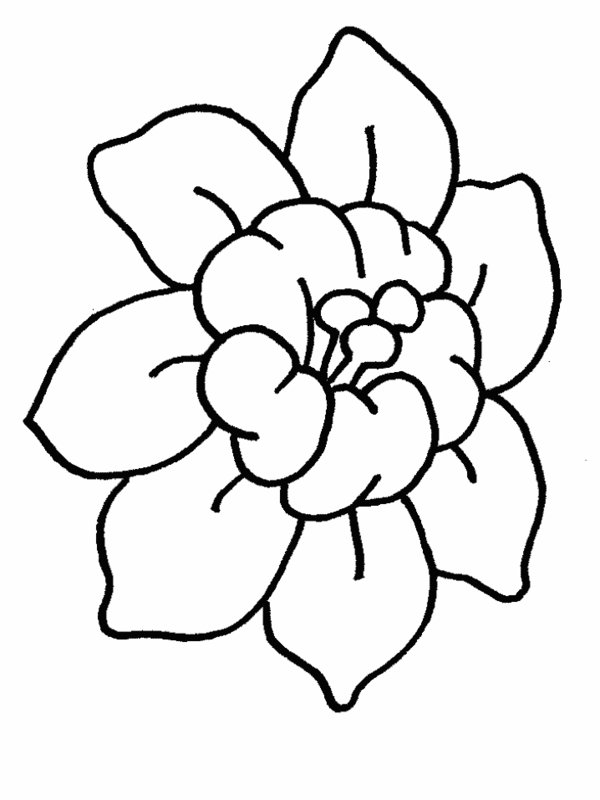 Cartoon Flower Drawings