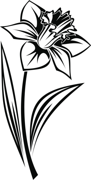 Outline Of Daffodil Clipart Best
