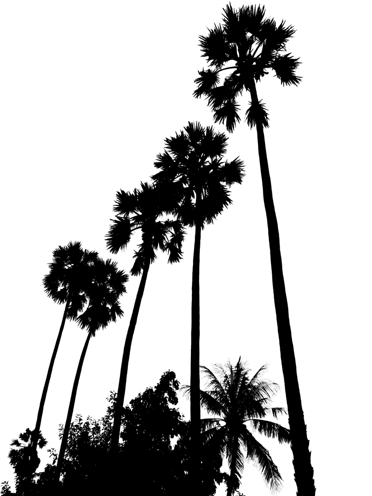 Silhouette Of Palm Tree - ClipArt Best
