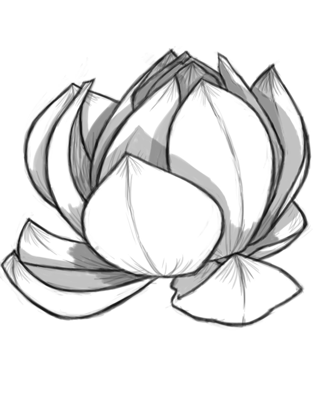 Lotus Drawing ClipArt Best