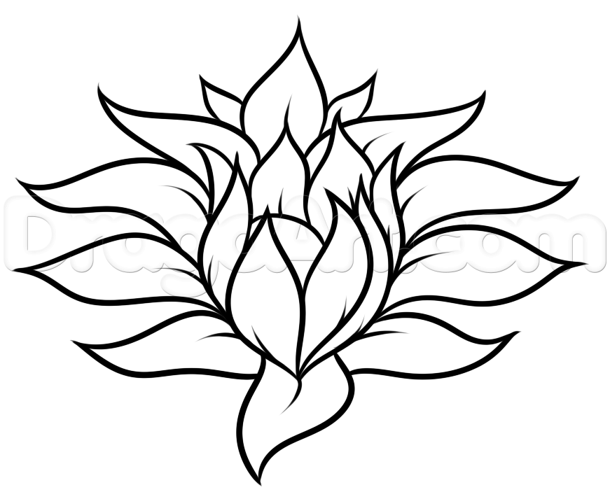 how to draw a rainforest flower