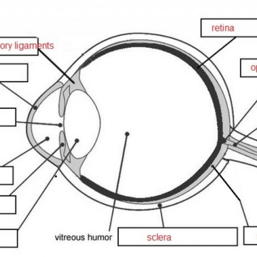 unlabeled eye diagram