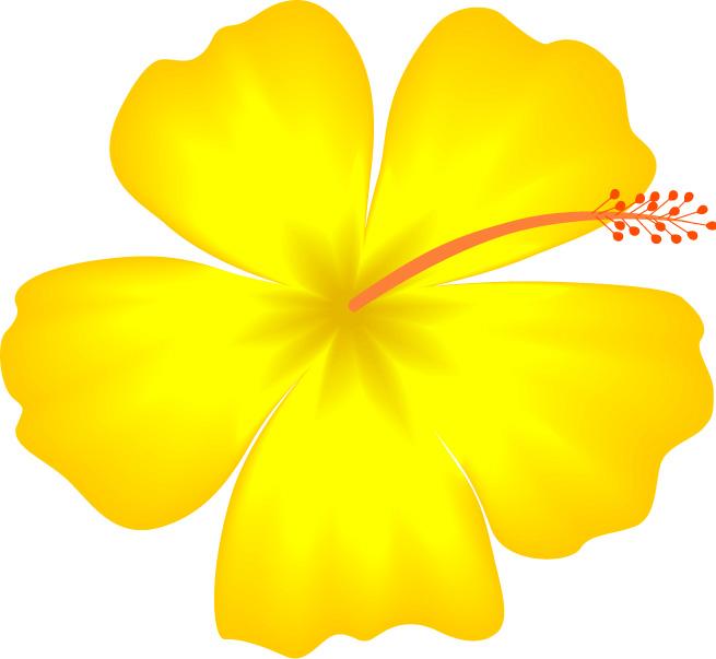 Pics Of Drawn Hawaiian Flowers - ClipArt Best