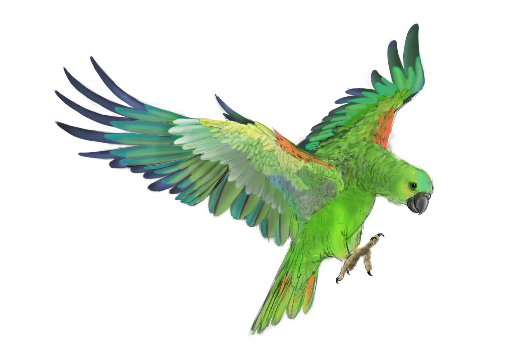 clipart parrot pictures - photo #47