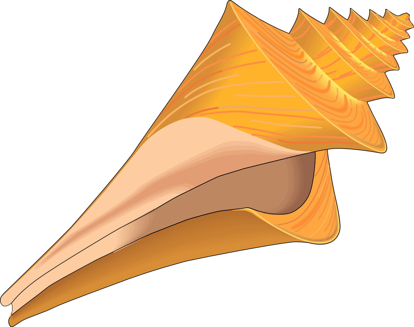 Sea Shell Clipart - ClipArt Best