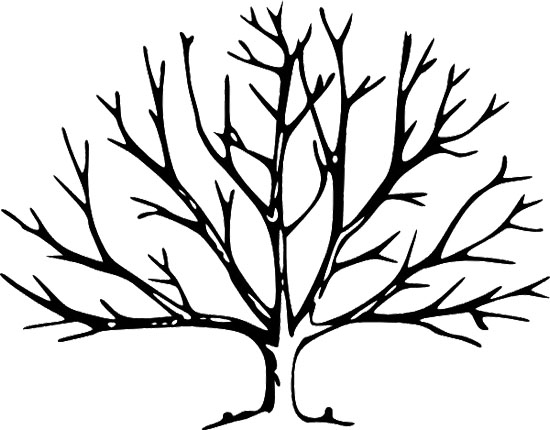 Tree Without Leaves Template - ClipArt Best