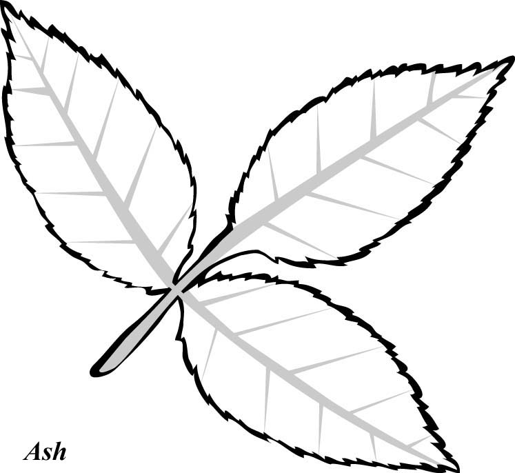 Line Drawing Leaves : Line drawings of leaves clipart best