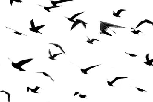 Flying Bird Flock Silh...