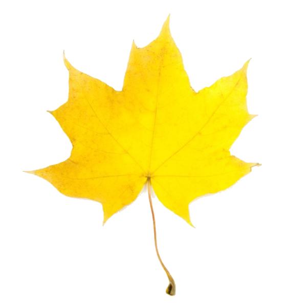 Clip Art Autumn Leaves Yellow - ClipArt Best