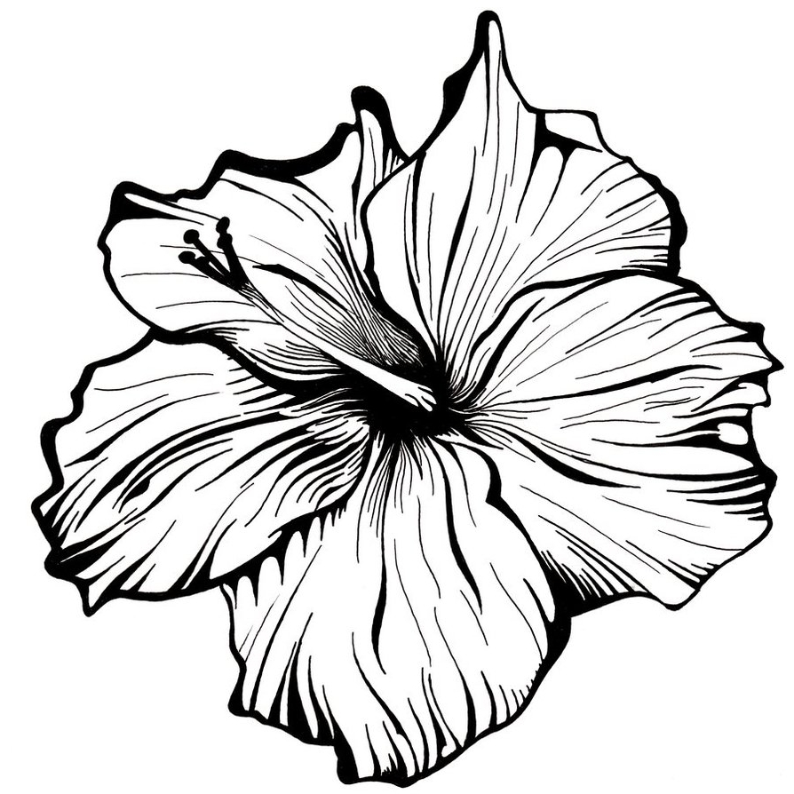 Line Art Flower Drawing : Line drawing flower clipart best