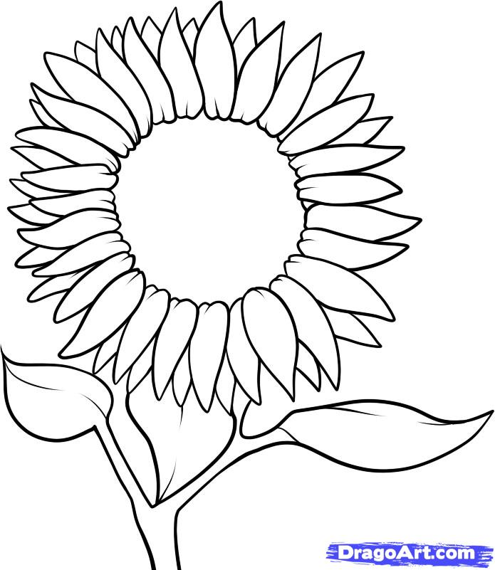 sunflower outline clipart best