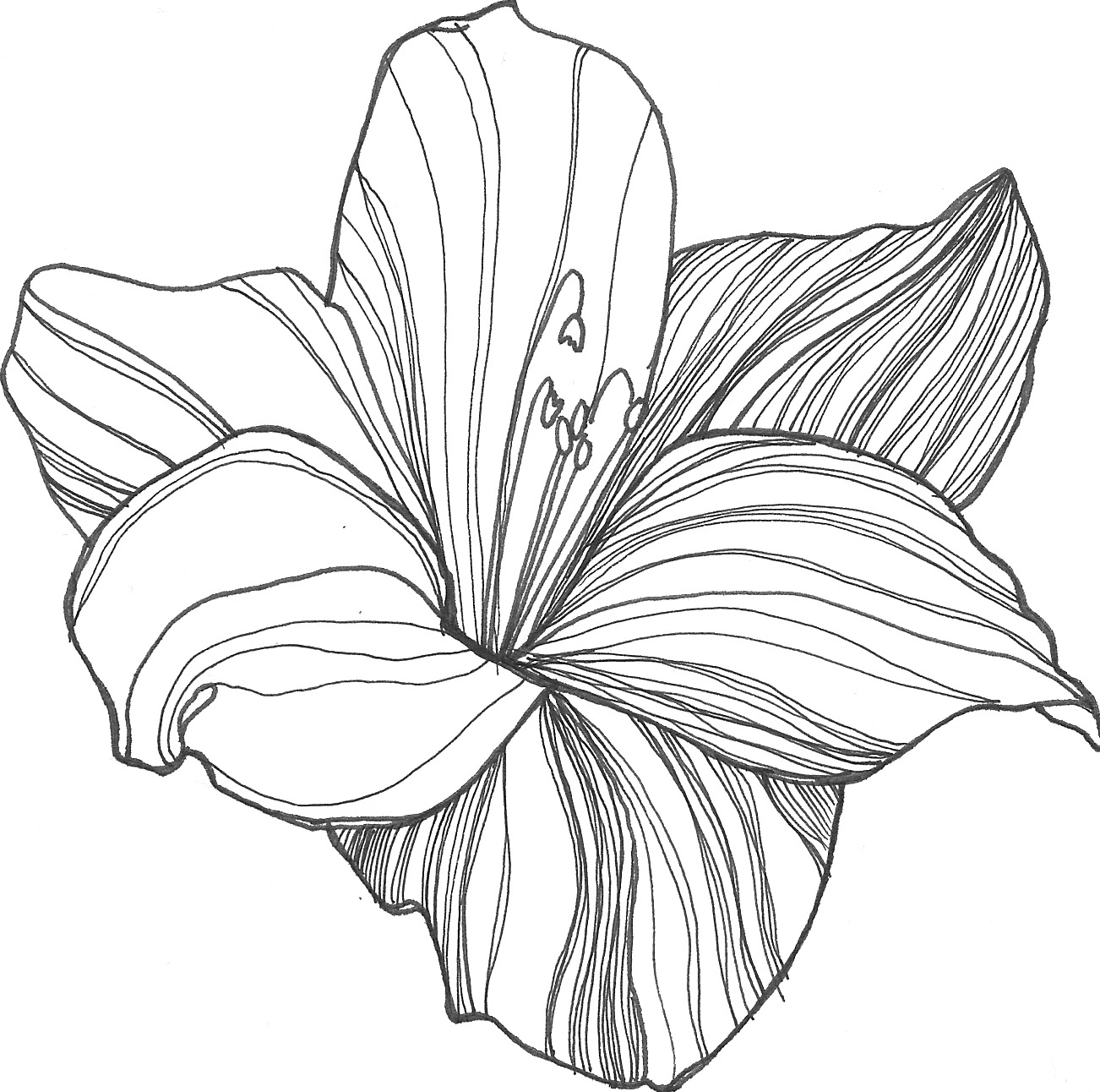 Line Drawing Flower Images : Drawing flowers clipart best